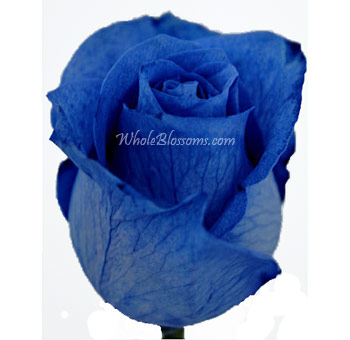 Blue Rose Tinted for Valentine's Day