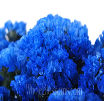 Statice Tinted Blue Flowers