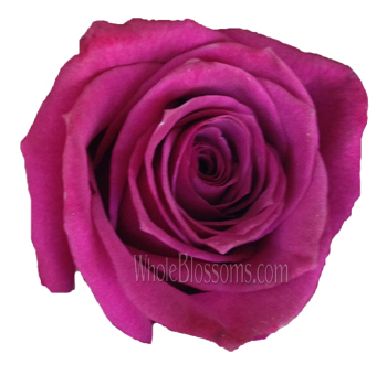 BlueBerry Fresh Cut Rose
