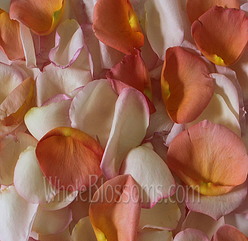 Premium Blush and Orange Rose Petals