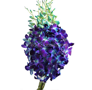 Dyed Blue Bom Dendrobium Orchid