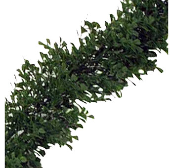 Boxwood Garland for Weddings