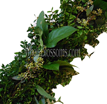 Boxwood Mix Garland