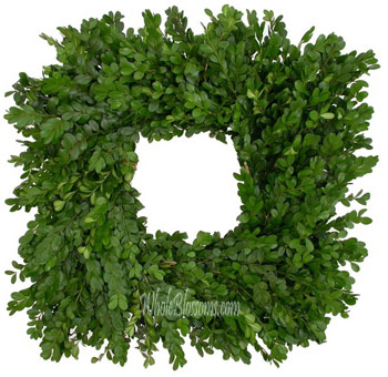 Boxwood Fresh Cut Squared Wreaths