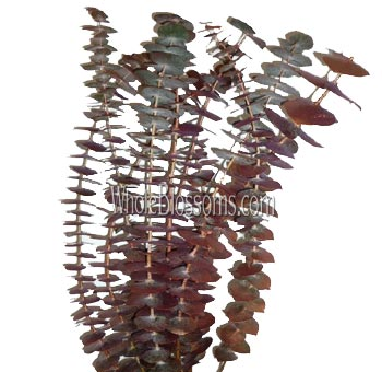 Eucalyptus Metallic Bronze Flower Filler