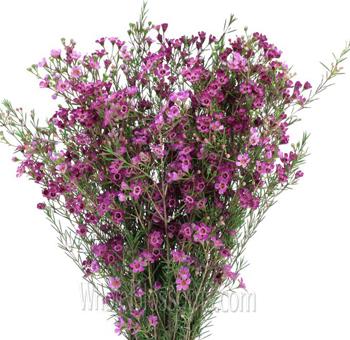 Wholesale purple flowers for wedding dark pink purple wax flower mightylinksfo