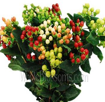 Hypericum Berries Flowers For Sale Wholesale Hypericum