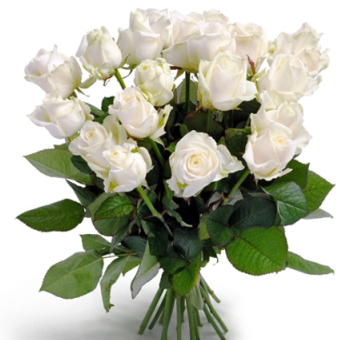 Long Stem White Roses