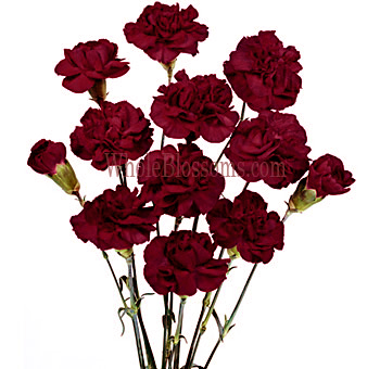 Burgundy Mini Carnations for Valentine's Day