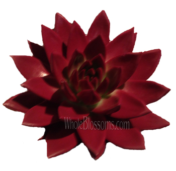 Burgundy Painted Succulent Flower