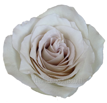 Early Grey Rose Buy Online Roses