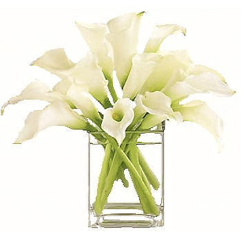 Calla Lily Gifts For Doctors & Nurses