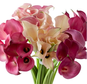 Calla Lily Pink Flowers Mix