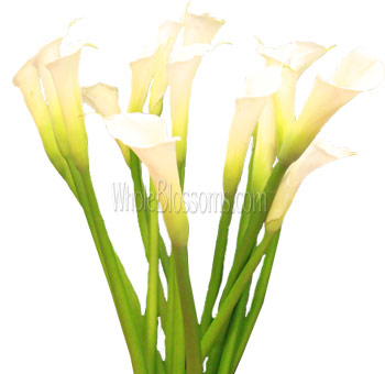 Calla Lily Open Cut White Flowers