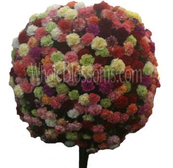 Wholesale Carnations