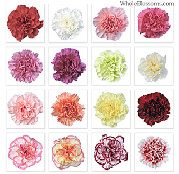Assorted Premium Carnations