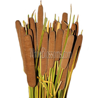 Wholesale Cattails