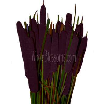 Dark Purple Eggplant Tinted Cat Tail Filler Flower