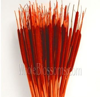 Cattails Tinted Orange Flowers