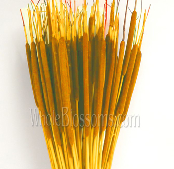 Cattails Tinted Yellow Flowers