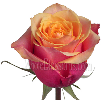 Cherry Brandy Orange Peach Roses