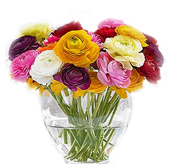 Ranunculus | Choose your colors 40 stems