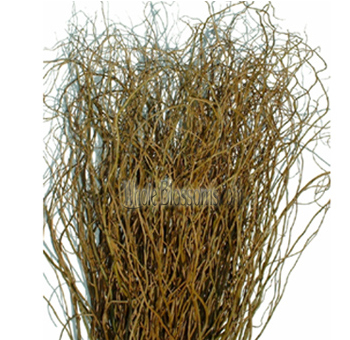 Wholesale Curly Willow Tips