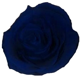 Dark Blue Preserved Roses Biological