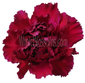 Burgundy Carnations for Valentine's Day