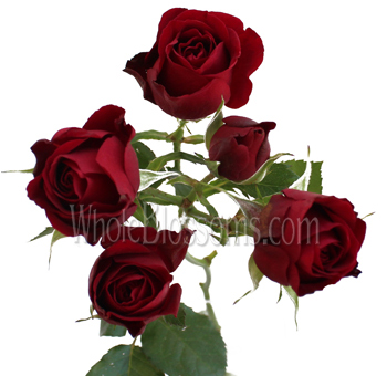 Spray Rose Dark Red Flower