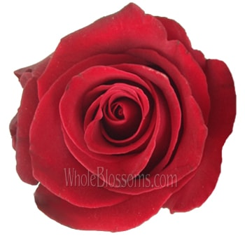 Red Organic Roses for Valentine's Day