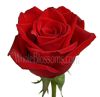 Wholesale Freedom Red Rose Flower
