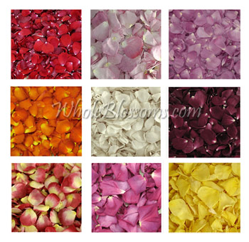 Freeze Dried Rose Petals Assorted