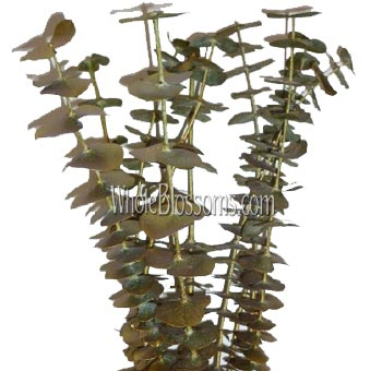 Eucalyptus Metallic Gold/Yellow Flower Fillers