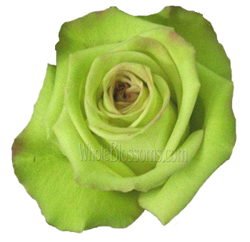 Green Fashion Roses