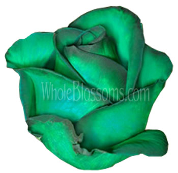 Green Tinted Wholesale Roses