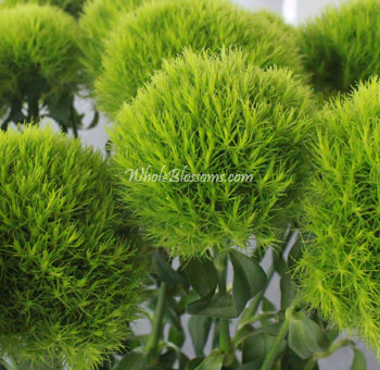 Green Trick Dianthus Flower Ball