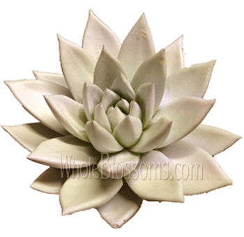 Succulent Painted Grey Flower