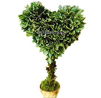 Var Pitt Heart Topiary Flower Filler