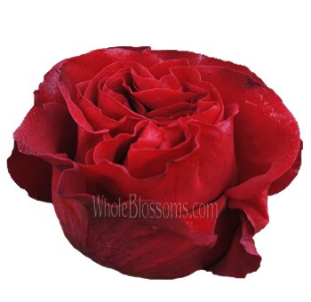 Hearts Red Rose