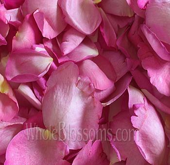 Fragrant hot pink rose petals fragrant hot pink petals mightylinksfo