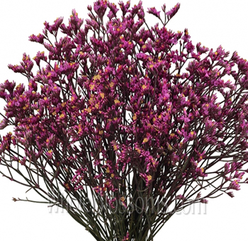 Limonium Tinted Dark Pink Flower