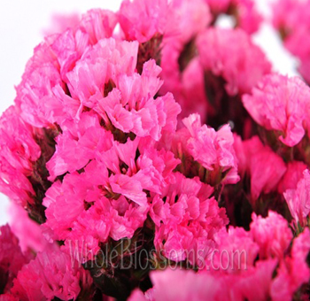 Statice Tinted Hot Pink Flower