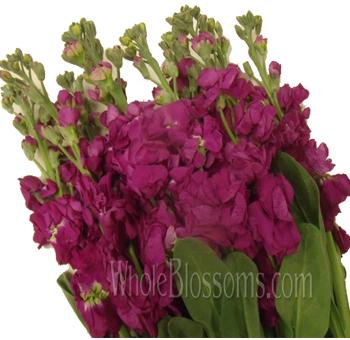 Stock wedding flowers wholesale stock flower at bulk for weddings stock hot pink flower mightylinksfo Gallery