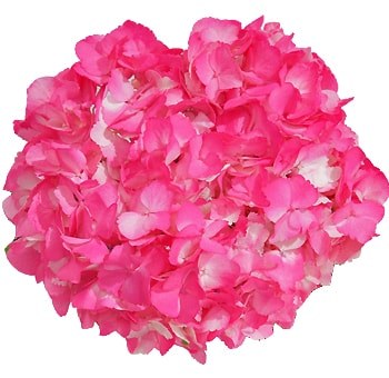 Hot Pink Airbrushed Hydrangea Flower