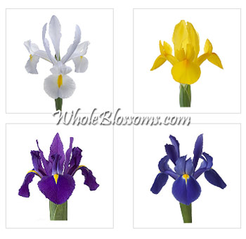 Iris Flowers Assorted