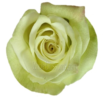 Valentine's Day Green Organic Roses