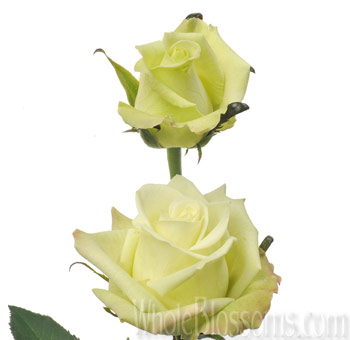 Jade Green Rose Wedding Flowers