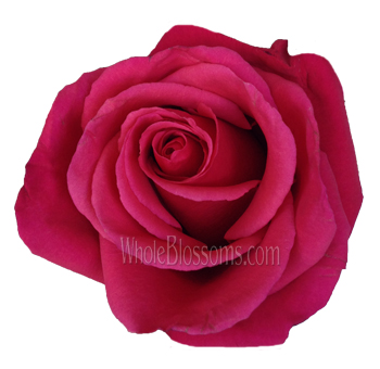 Latin Cherry Dark Red Rose