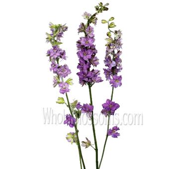 Larkspur Flower Blue Lavender
